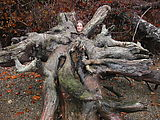 Beach - Xan - Tree Roots