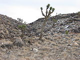 Saline Valley Road - Joshua Trees - Snow