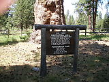 La Pine - Big Tree - Sign