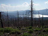 Deschutes National Forest - Davis Mountain