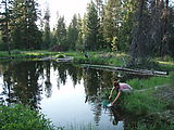 Deschutes National Forest - Camping South of - Davis Lake - Laura - Pond
