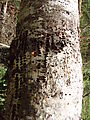 Deception Creek Trail Hike - Woodpecker Holes (Photo by Laura)