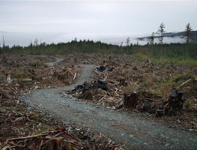 [Image: Vancouver-Island--Southern-Coast-005--Ca...earcut.jpg]