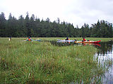 Marsh - Kayaking
