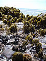 California Coast - Beach - Tidepools