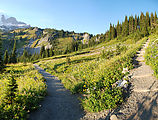 Mount Rainier National Park - Flowers - Trail - Switchback