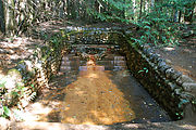 Mount Rainier National Park - Longmire - Iron Water Spring