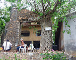 Boat Ride - Chacala - Tree Growing on Old Building