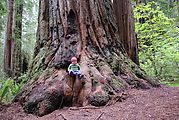 Redwood National Park - Stout Grove - Lyra