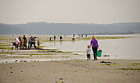 Beach - Tideflats - Hansville - Clamming