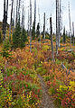 Shedroof Divide Trail - Leaves - Fall Colors