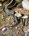 Granite Roosevelt Trail - Snakes