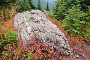 Abercrombie Mountain - Leaves - Fall Colors - Rock