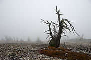 Abercrombie Mountain - Summit - Fog - Dead Tree
