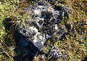 Bangs Mountain - Campsite - Lichens - Rock