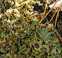 Sherman Loop Trail - Lichens