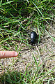 Potholes Coulee - Hiking to Judith Pool - Beetle