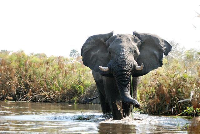 Botswana Okavango Southern Africa 2007