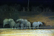 Botswana - Waterhole by the Lodge at Night - Elephant