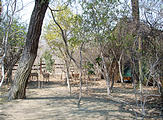 Botswana - Savute Safari Lodge