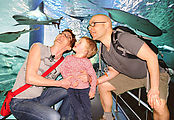 Melbourne - Aquarium - Laura - Lyra - Geoff (Photo by Aquarium)
