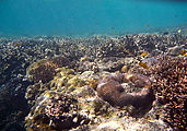 Whitsundays - Great Barrier Reef - Hardy Reef - Snorkeling