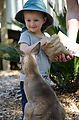 Townsville - Billabong Sanctuary - Kangaroo - Feeding - Lyra