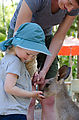 Townsville - Billabong Sanctuary - Kangaroo - Feeding - Laura - Lyra
