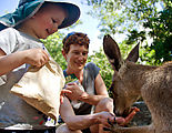 Townsville - Billabong Sanctuary - Kangaroo - Feeding - Lyra - Laura