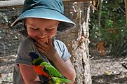 Townsville - Billabong Sanctuary - Bird - Rainbow Lorikeet - Lyra (Photo by Liz)
