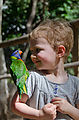 Townsville - Billabong Sanctuary - Bird - Rainbow Lorikeet - Lyra