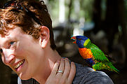 Townsville - Billabong Sanctuary - Bird - Rainbow Lorikeet - Laura