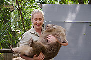 Townsville - Billabong Sanctuary - Wombat
