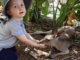 Townsville - Billabong Sanctuary - Kangaroo - Feeding - Lyra (Photo by Laura)