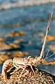 Evening - Lobster Shell (Punta Las Pilitas)