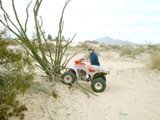 San Felipe - ATVs - Tracey Crashes into Cactus