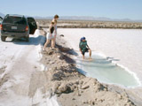 Driving North from San Felipe: Detour to see Salt Flats - Leo in Salty Puddle