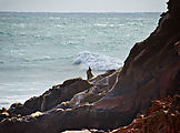 Baja - Morro Santo Domingo - Arch Beach - Sea Lions