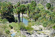 Baja - La Purification - Valley - Water - Palm Trees