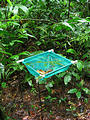 OTS La Selva Biological Station - Net for Study (Dec 26, 2005 9:48 AM)