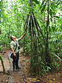 OTS La Selva Biological Station - Guide - Roots (Dec 26, 2005 10:17 AM)