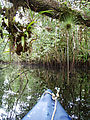 Río Dulce - Kayaking - Manatee Reserve