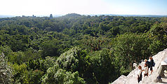 Tikal - Pyramid Ruin - View From Temple IV