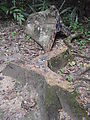 Tikal - Tree Stump