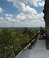 Tikal - Pyramid Ruin - View from Temple V
