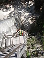 Tikal - Pyramid Ruin - Temple V - 100-ft. Wooden Access Ladder - Laura