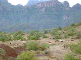 Road to Agua Verde - Campsite - Goats Passing Through