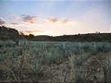 Tequila - Agave Field