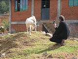 Brian Photographing Goat
