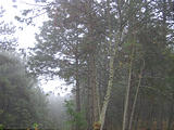 El Bosque - Trees Fog (photo by Brian)